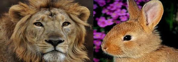 como diferenciar facilmente a un carnivoro de un herbivoro