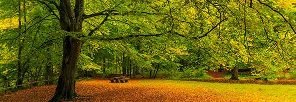 ¿Por qué las hojas de los árboles se vuelven marrones en Otoño?
