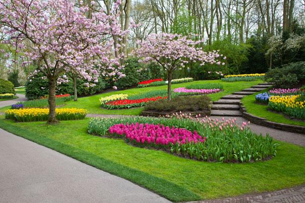 Parque keukenhof en holanda for Plantas ornamentales para parques