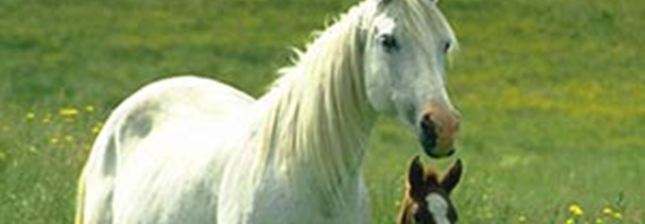 caballos vomitar
