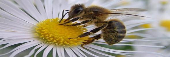 sabias que la abeja reina puede elegir el sexo del huevo que va a poner