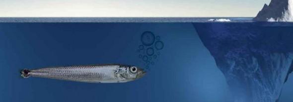 los peces no se congelan antartico