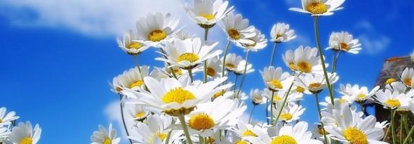 por que nacen las flores en primavera flores blancas