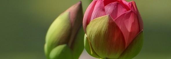 flor cerrada por la noche