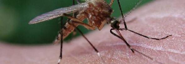 por que nos pican los mosquitos