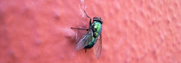 como puede una mosca andar por las paredes