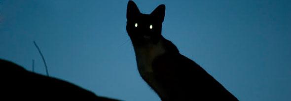 por que los ojos de los gatos brillan en la oscuridad