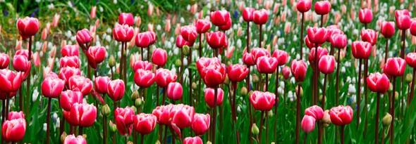 Aumenta el deseo sexual en primavera