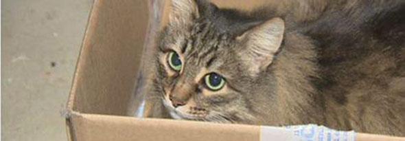 Una gata callejera evita que un bebe abandonado muera de frio