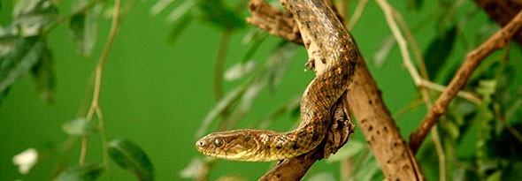 Sabías que las serpientes son sordas