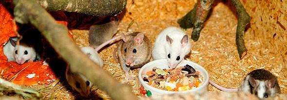 A los ratones no les gustan el queso