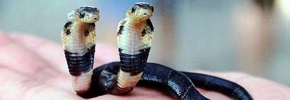 Nace una serpiente de dos cabezas