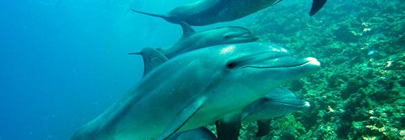 ¿Sabías que los delfines duermen con un ojo abierto?