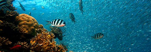 ¿Sabías que la primavera también se nota en el mar?