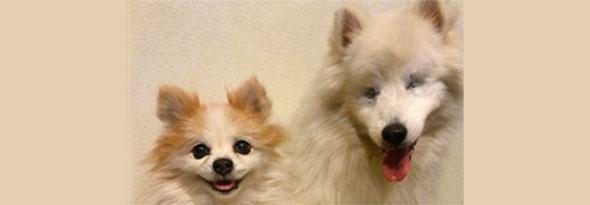 Un perro se convierte en guía de otro