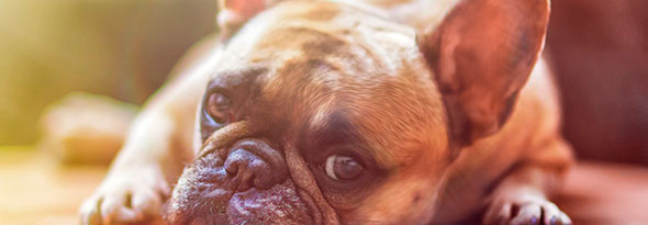 ¿Sabías que los perros prestan atención?