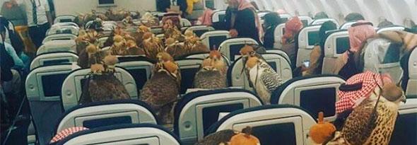 80 halcones en primera clase