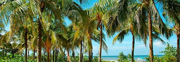 ¿Sabías que las palmeras no son árboles?