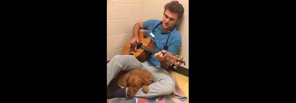 Un veterinario tranquiliza a un perro cantando